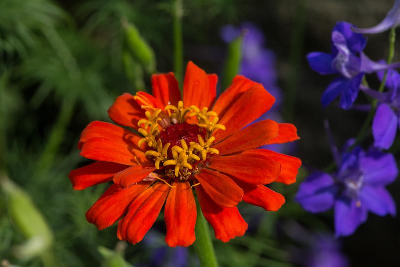 Flowers 2015-24