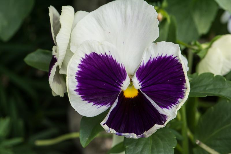 Flowers 2015-32
