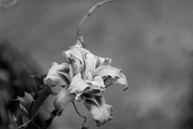 Flowers 2015-12