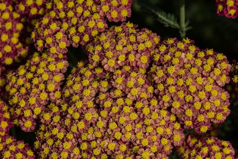 Flowers 2015-23