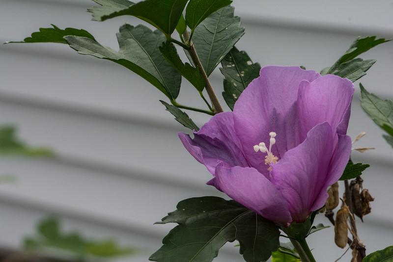 Flowers 2015-2