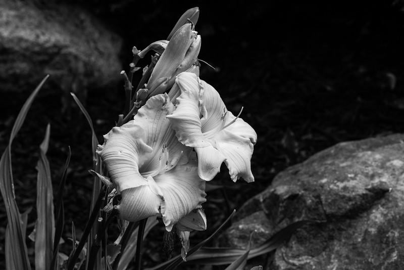 Flowers 2015-14