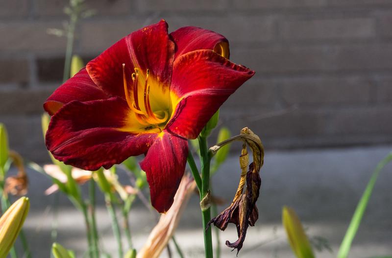 Flowers 2015-42