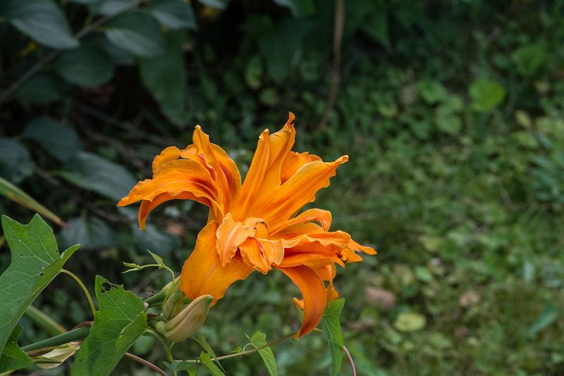 Flowers 2015-8