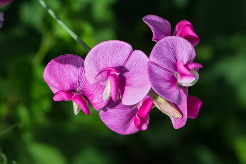 Flowers 2015-38
