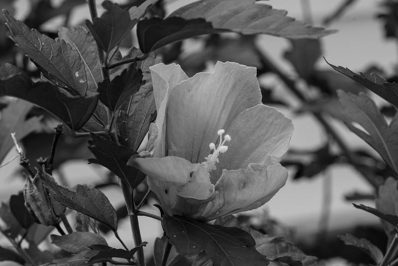 Flowers 2015-4
