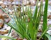 Small plant @ The Alamo (San Antonio, TX)