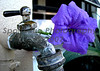 Flower and faucet
