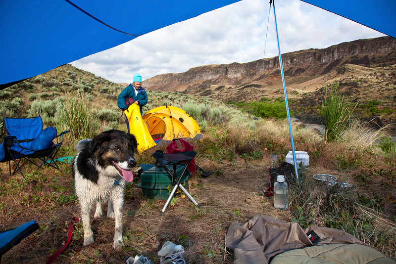 A young Pup Dog on Lower Owyhee