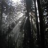Opal Creek Wilderness,<br /> Oregon