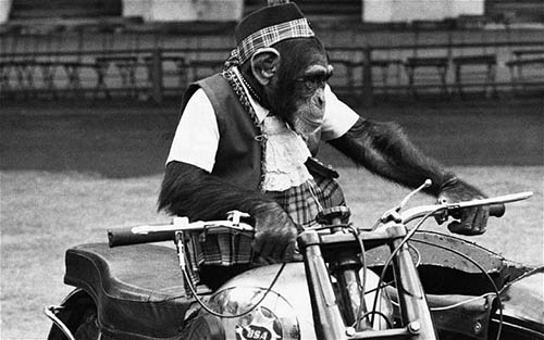 """Motorcycle Chimp...July 1959, London, England, UK --- Original caption: Wait for it. Monkeys get up to some amusing and clever tricks, but one seen at the Duke of York's headquarters, Chelsea, this morning rather takes the cake. A chimpanzee Johnny McTurk """"drives"""" a motor cycle combination and is chased by a """"policewoman"""". He is rehearsing for the White City Searchlight Tattoo next month (17-28th) as part of the Army Mechanical Transport School's display. Actually the motor cycle is driven by remote control.  Photo shows: Johnny McTurk dressed in Scottish fashion sits on the motor cycle during rehearsals this morning in Chelsea.  29/7/59 --- Image by  Hulton-Deutsch Collection/CORBIS"""