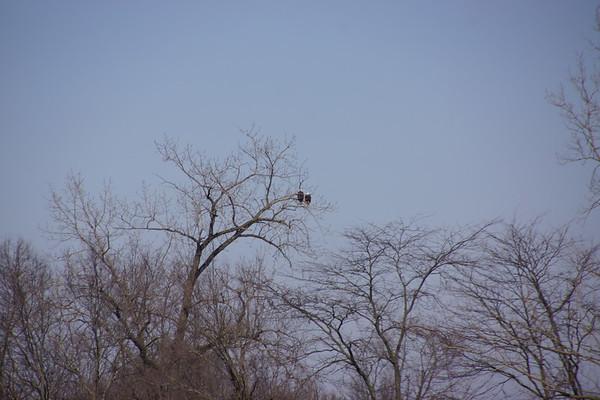Missisenawa Eagles