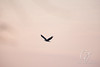 Eagles_1842