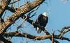 Eagles_2821