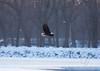 Eagles_1685
