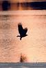 Eagles_2683