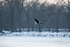 Eagles_1684