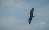 Eagles_3514