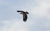 Eagles_3571