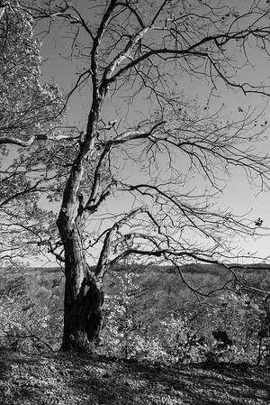 Castlewood State Park November 3 2014