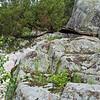 Castor River Shut-Ins-6