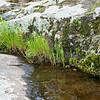 Castor River Shut-Ins-7