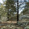 Hughes Mountain Natural Area, Washington County Missouri