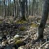 Millstream Gardens March 11 07_DSC5791