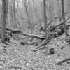 Rockwoods Reservation-0368