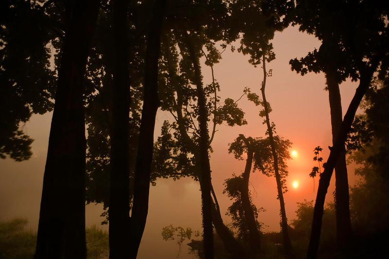 Misty Morning 7/20/2011