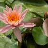 Mo Botonal Garden - Mostly Dragonflies-0124