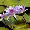 Mo Botonal Garden - Mostly Dragonflies-0121