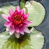 Mo Botonal Garden - Mostly Dragonflies-0126