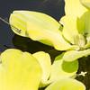 Mo Botonal Garden - Mostly Dragonflies-0176