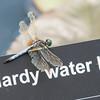 Mo Botonal Garden - Mostly Dragonflies-0130