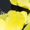 Mo Botonal Garden - Mostly Dragonflies-0179