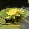 Mo Botonal Garden - Mostly Dragonflies-0123