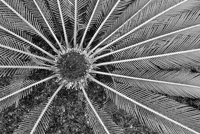 MO Botanical Garden January 22 2017