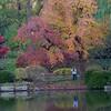 Mo Botanical Garden 110812-17