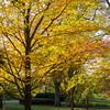 Mo Botanical Garden 110812-2