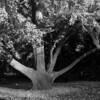 Mo Botanical Garden 110812-3