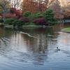 Mo Botanical Garden 110812-18
