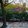 Mo Botanical Garden 110812-20