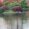 Mo Botanical Garden 110812-19