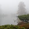 Mo Botanical Garden 112112-10