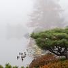 Mo Botanical Garden 112112-8