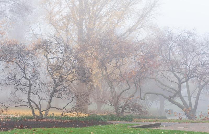 Mo Botanical Garden 112112-1