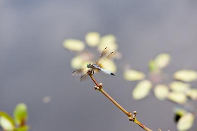 Mo Botanical Garden - Bugs Etc 080811