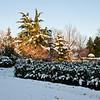 Mo Botanical Garden Dec 26 2010-4