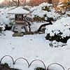 Mo Botanical Garden Dec 26 2010-11